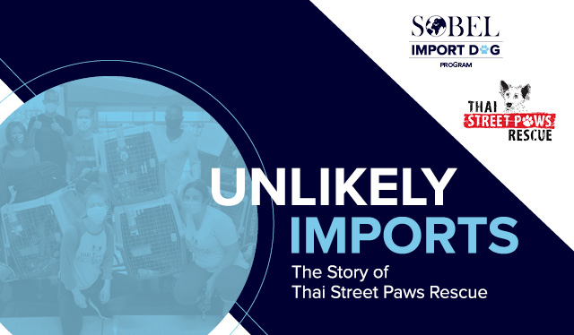 Blog image for Unlikely Imports: The Story of Thai Street Paws Rescue